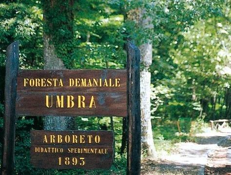 foresta umbra fg