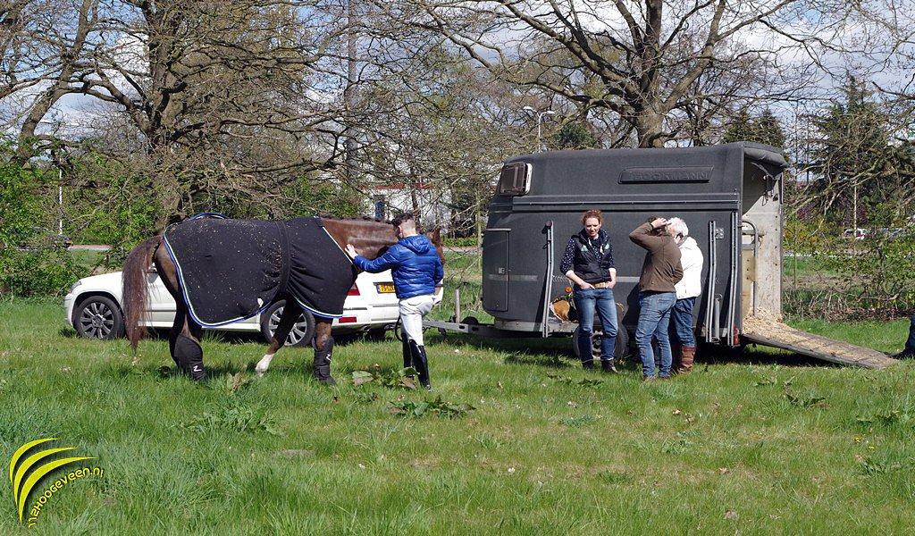 paard,paniek,Zuidwoldigerweg,Hoogeveen