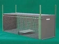 Catalogo topi e piccioni