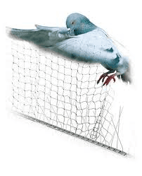 Reti piccioni