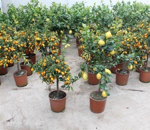 piante e vasi da interno ed esterno