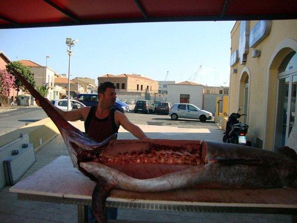 Vendita pesce Milazzo