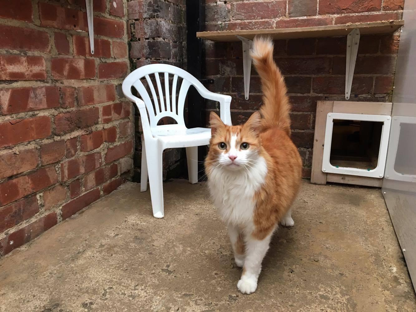 cat enjoying outside space