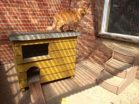 pet cat enjoying the luxury life