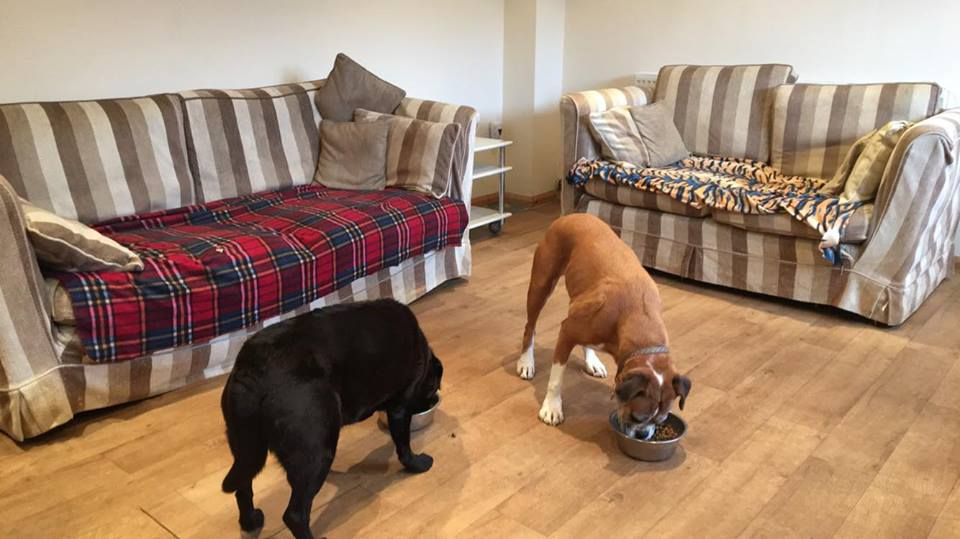 dogs holiday in luxury boarding kennels