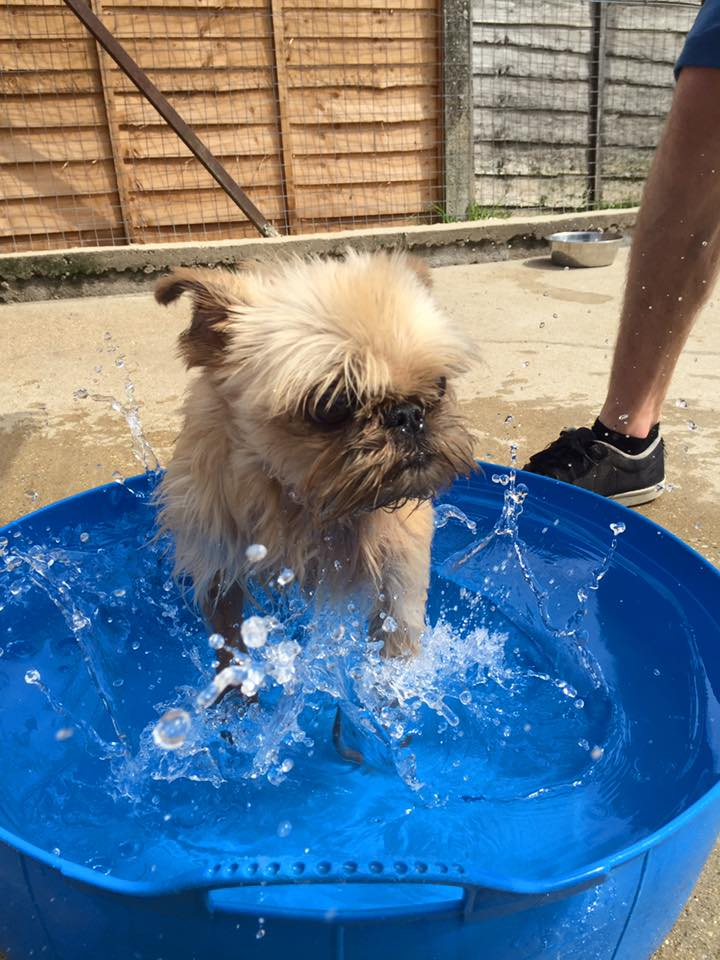 teddy the dog splashing in water