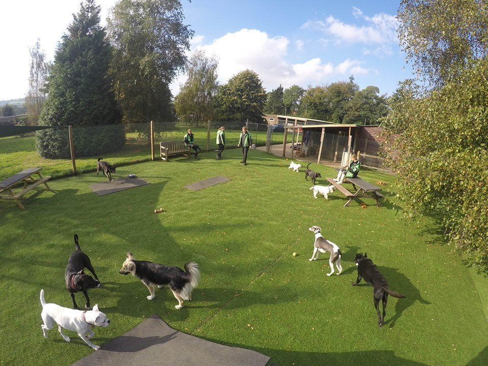 Dogs socialising in dog day care barking success
