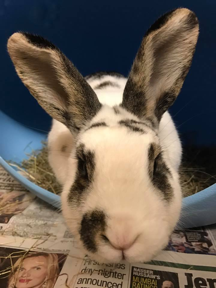 Bunny rabbit boarding