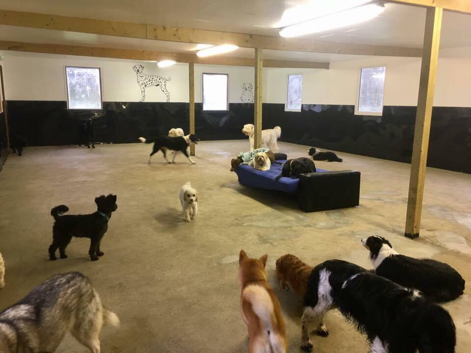 Inside shelter for day care dogs with heatin
