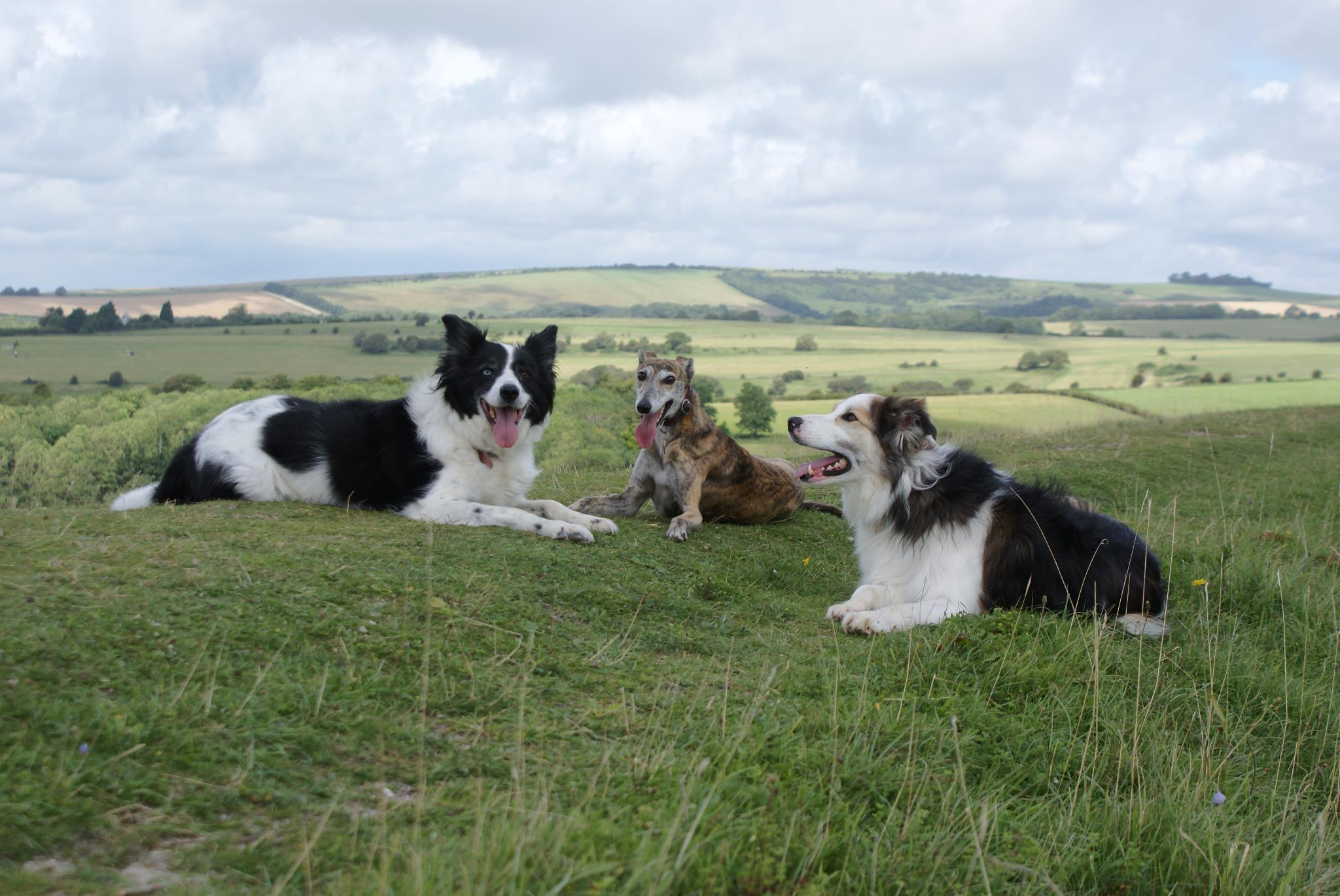 dog training collies sussex downs