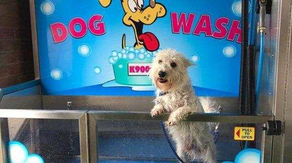 k9000 dog self service wash with a westie