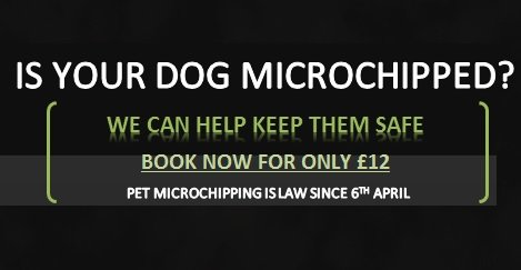 Dog Microchiping Available