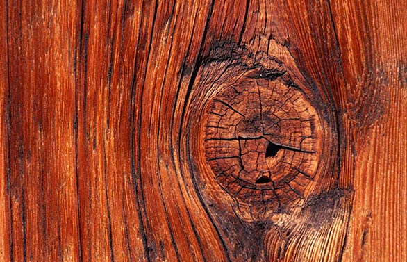 adams tree services red wood