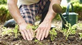 coltivazione selettiva, ortaggi, verdure fresche