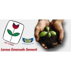 la rosa, professionalità giardino, semi e coltivazione