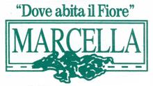 Marcella Fiori