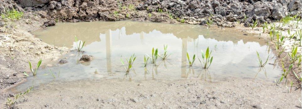 terreno paludoso durante la bonifica