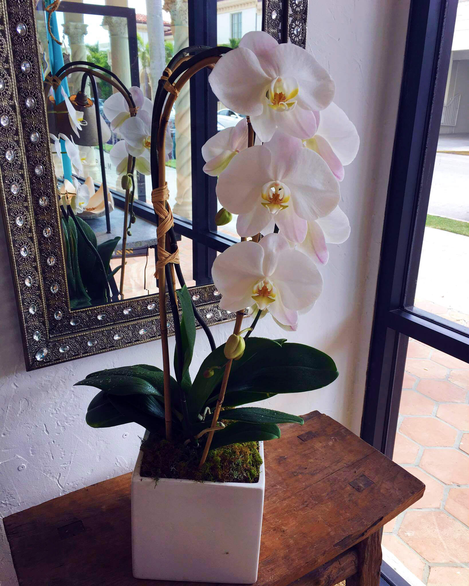 Palm beach orchids by lindsey orchid delivery