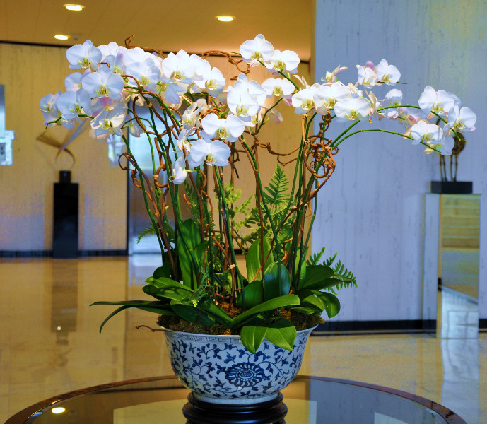 Palm Beach Orchid Specialist Display