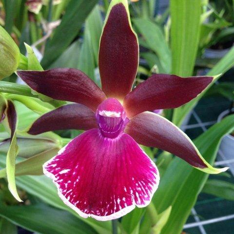 www.rivaverdegarden.com/piante.html