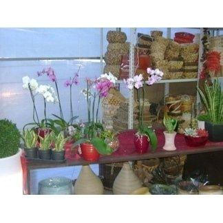 orchidee in vaso