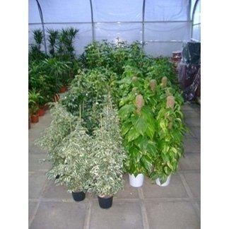 piante verdi da interno