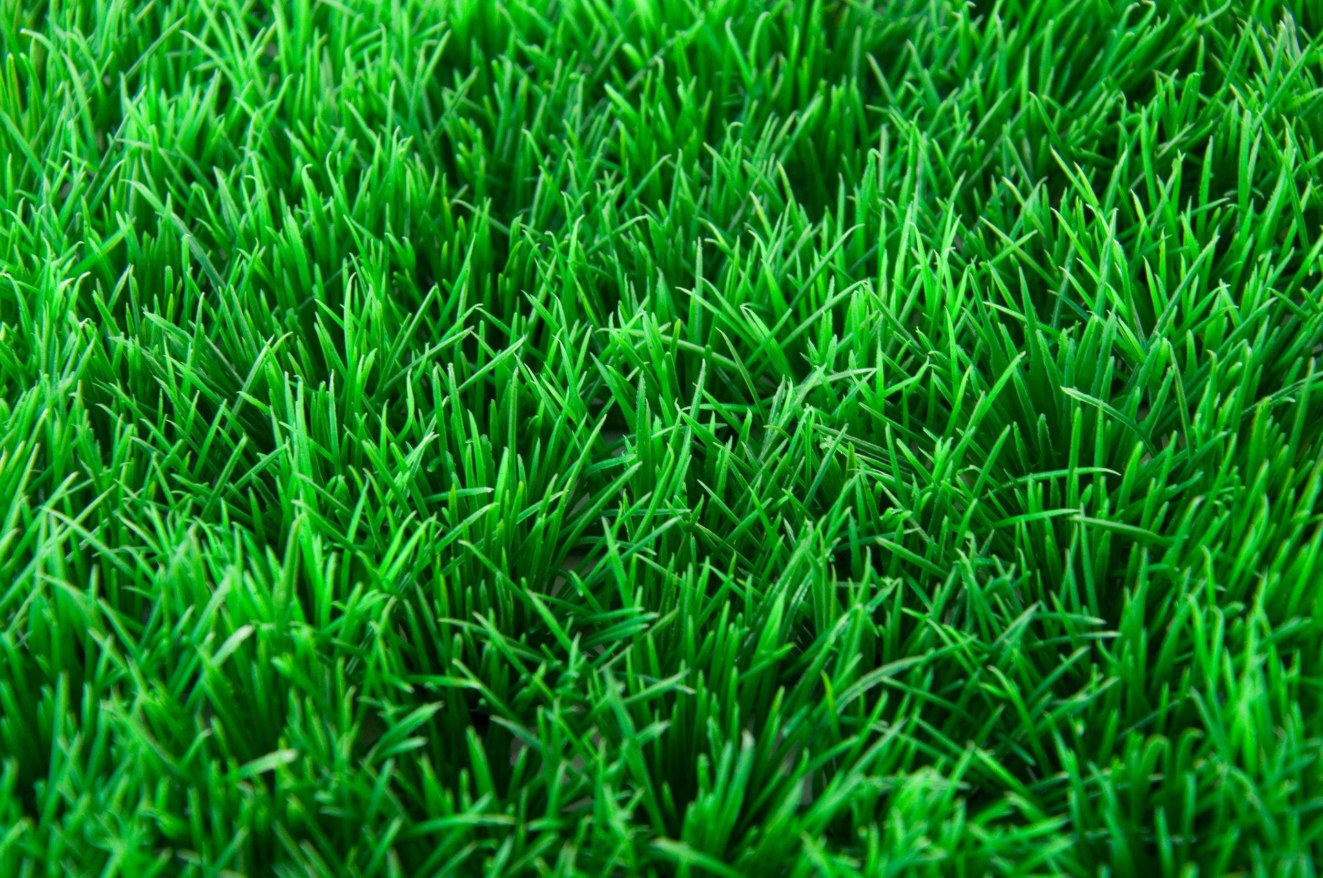 Artificial Grass Fremont, CA