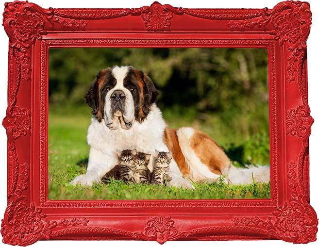 family-pet-photos