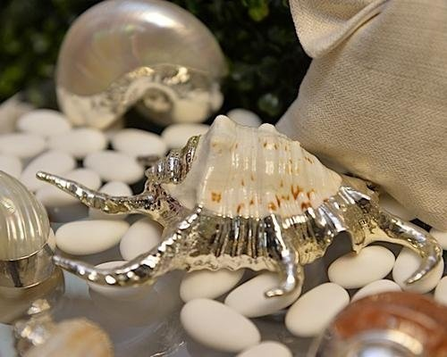Dettaglio conchiglia con placcatura argento