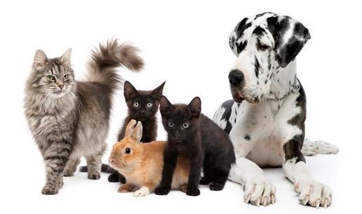 cura animali brescia