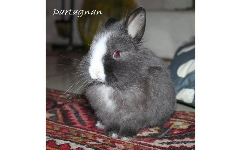 Veterinari conigli brescia