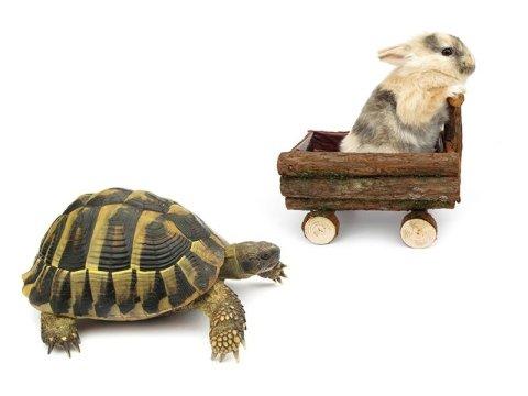 veterinario tartarughe brescia