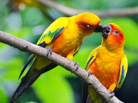 veterinario uccelli brescia