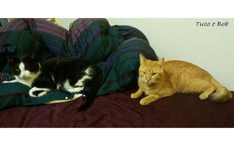 Veterinario per gatti brescia