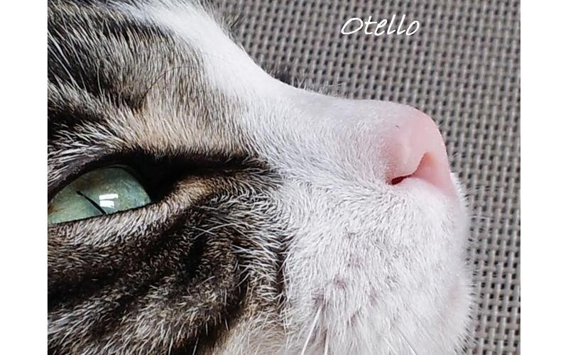 Ambulatori gatti brescia