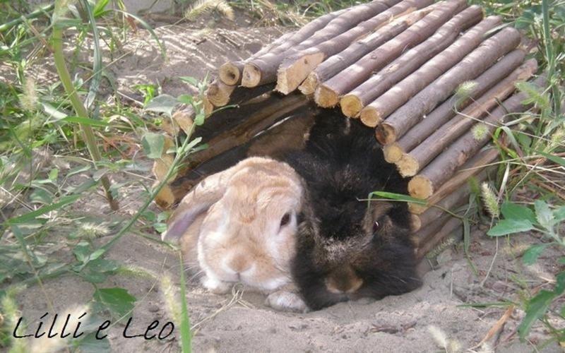 Veterinari animali brescia