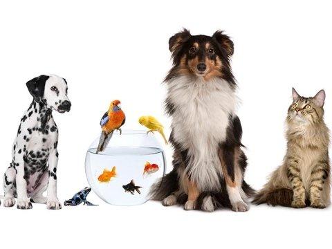 ambulatori di veterinaria brescia