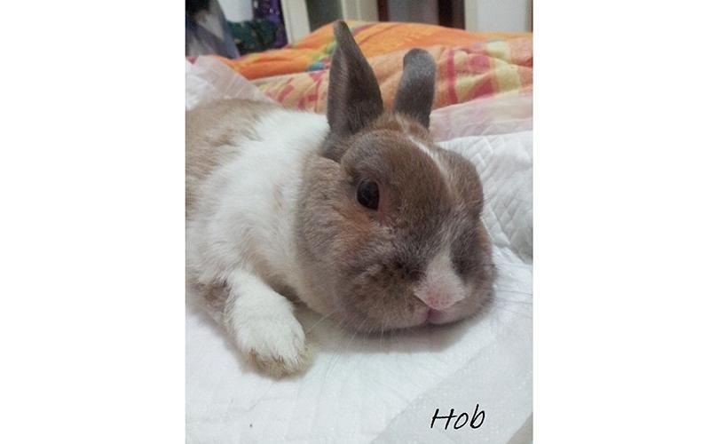 Ambulatori per conigli brescia