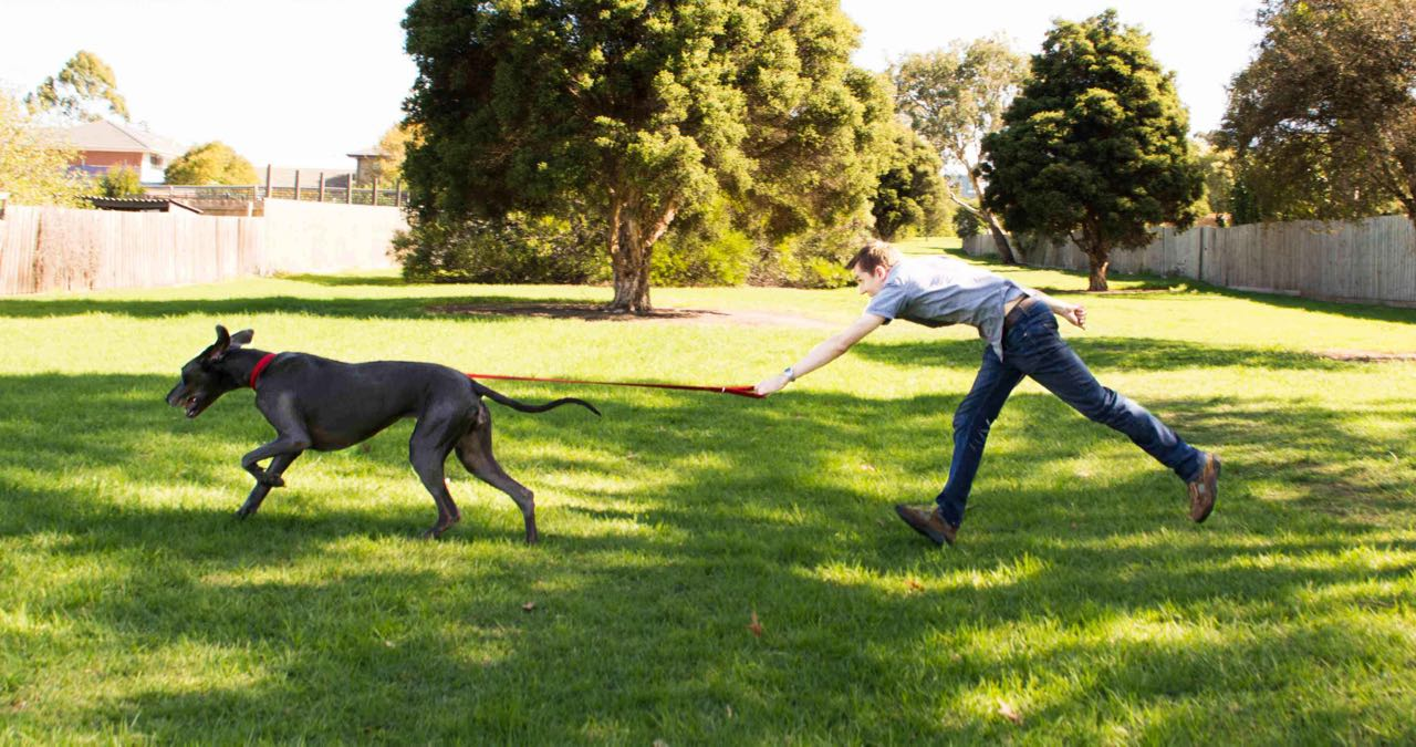 Teaching Your Dog To Walk Nicely On A Leash