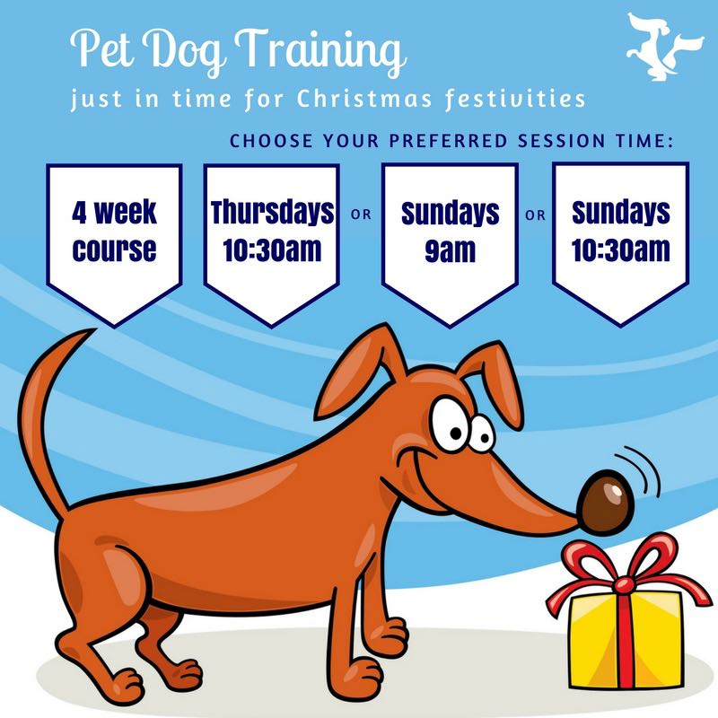 Pet Dog Training for Christmas