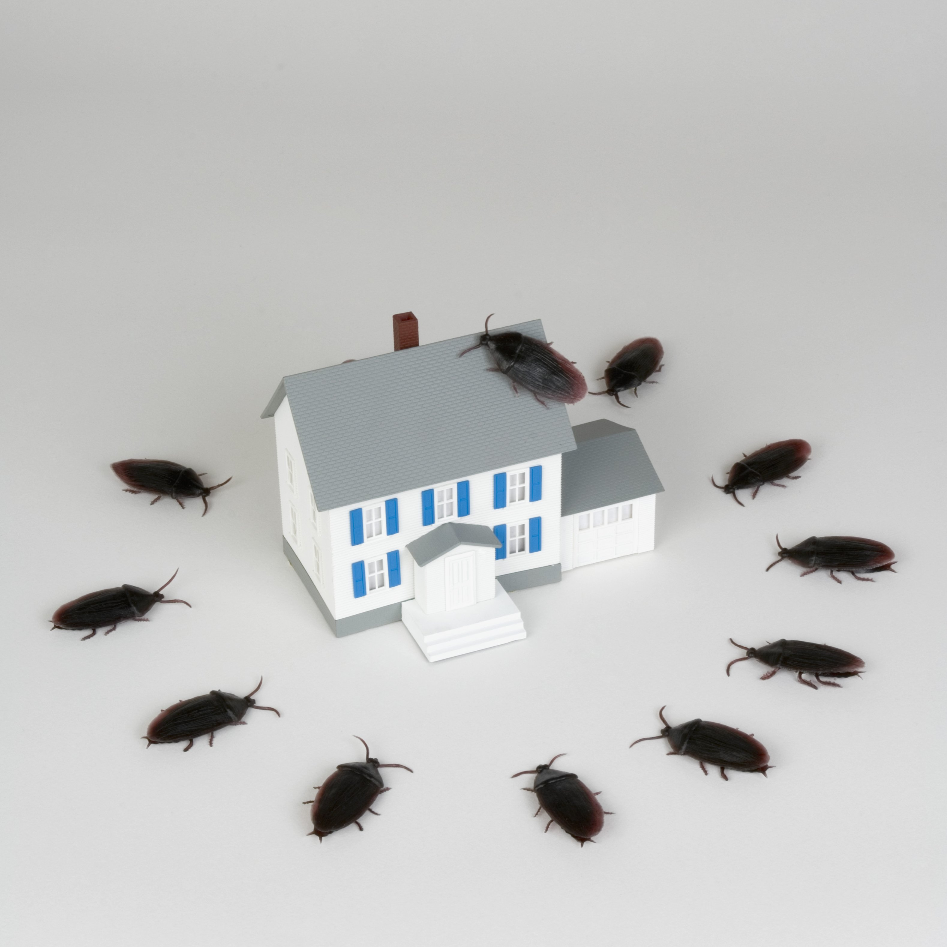 Cold weather drives pest into the warm sanctuary of your home