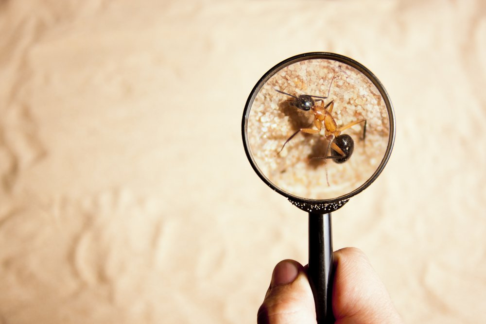 Pest, Rodent and Termite Control