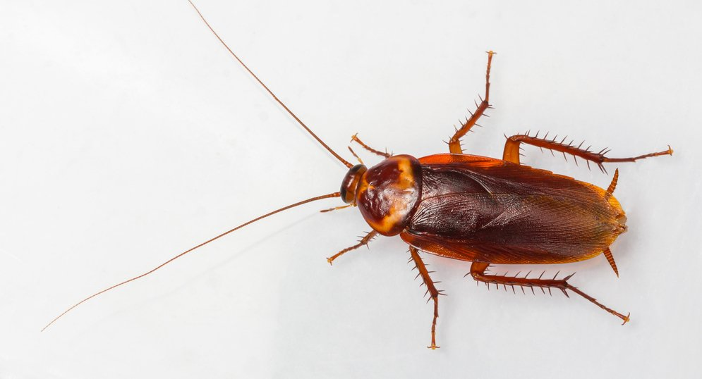 Get rid of roaches during the winter