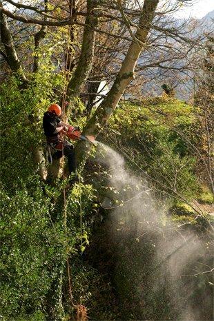 Man chopping a tree