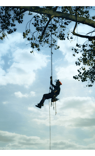 Man dangling from a tree on a rope