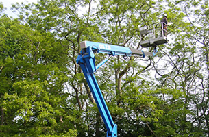 For tree care in Southampton call MJC Tree Surgeons Ltd