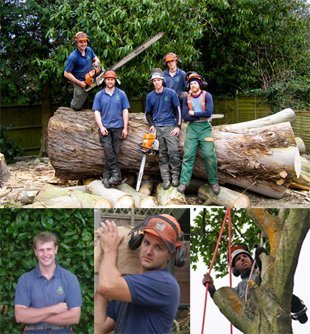 Group of tree surgeons
