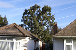 For hedge trimming in Southampton call MJC Tree Surgeons Ltd
