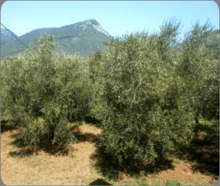 produzione olio alimentare