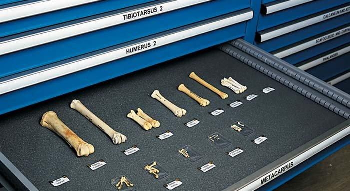 esposizione di ossa storiche